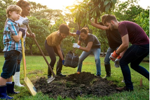 group-of-people-plant-a-tree-together-outdoors-picture-id668218230